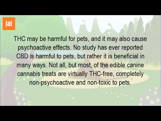 Can You Give CBD Oil To Dogs?