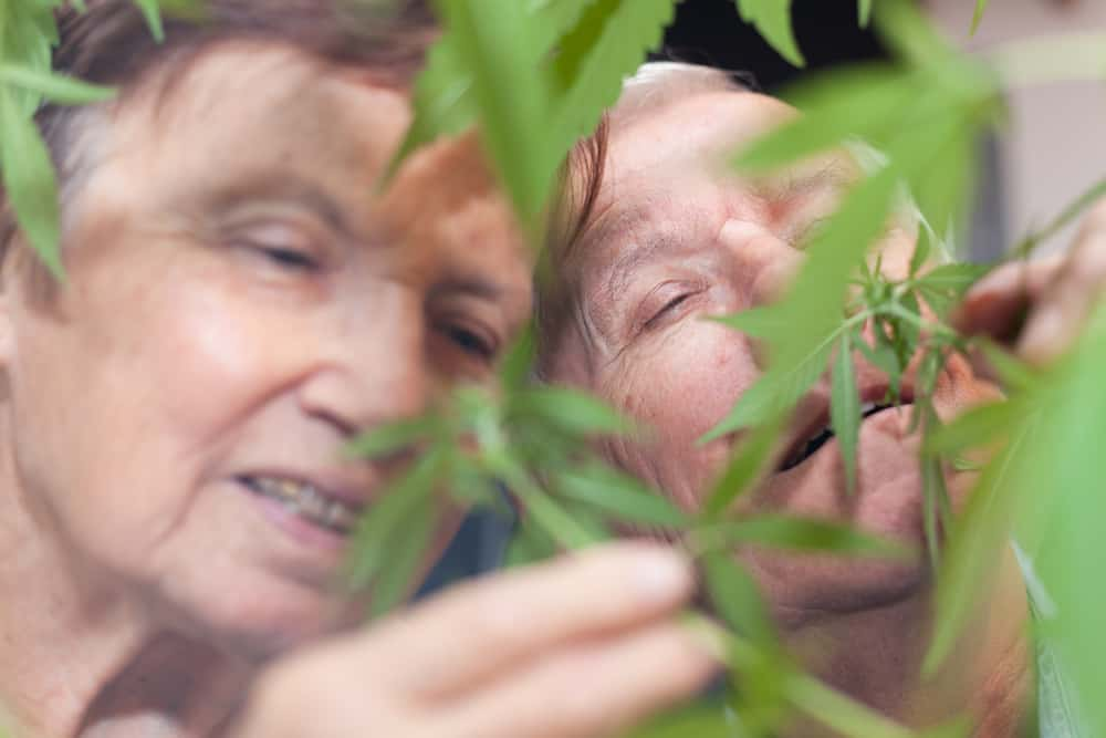 Should Medical Marijuana Be Given To Seniors?