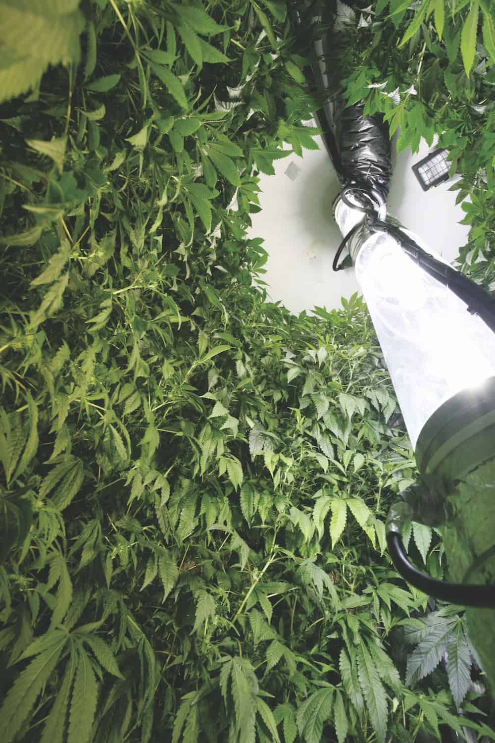 Vertical Growing: Maximize Your Yield in Tight Spaces