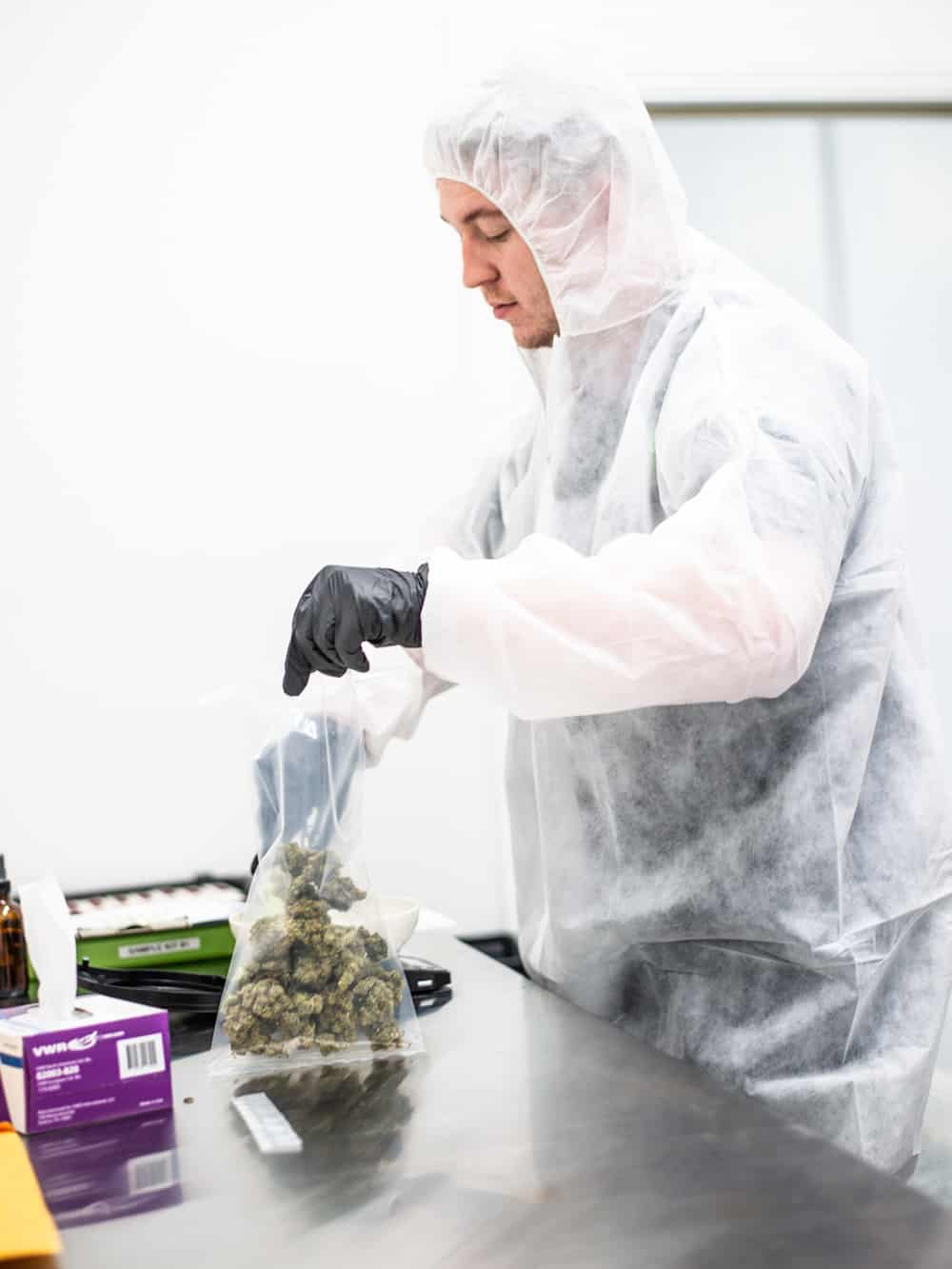 Welcome to the Leading Lab in Cannabis