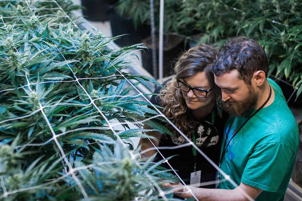 Six Couples Open Up About Working In Cannabis Together